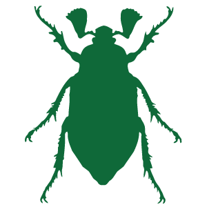 Cockchafers
