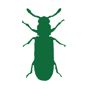 powderpostbeetle