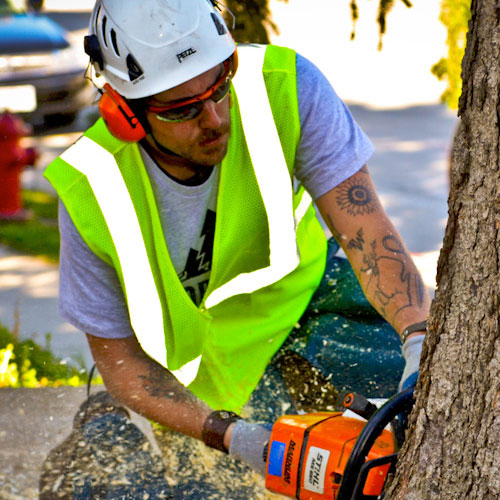 treeservices