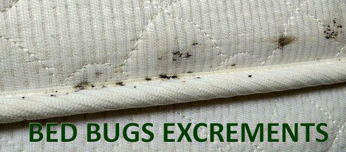 All About Bed Bugs Detection Amiral Serviceamiral Service